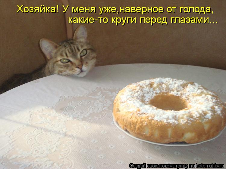 Котоматрица: Хозяйка! У меня уже,наверное от голода, какие-то круги перед глазами...