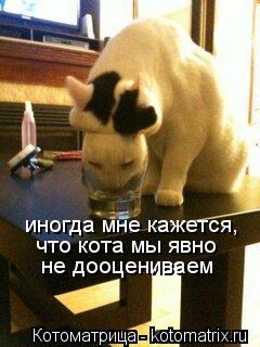 Котоматрица: иногда мне кажется, что кота мы явно не дооцениваем