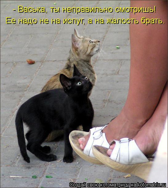Котоматрица: - Васька, ты неправильно смотришь! Ее надо не на испуг, а на жалость брать.