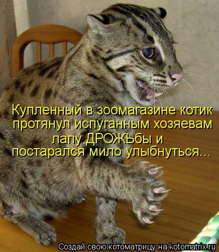 Котоматрица: постарался мило улыбнуться... Купленный в зоомагазине котик лапу ДРОЖЬбы и протянул испуганным хозяевам