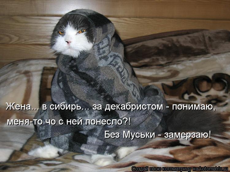 Котоматрица: Жена... в сибирь... за декабристом - понимаю, меня-то чо с ней понесло?!  Без Муськи - замерзаю!