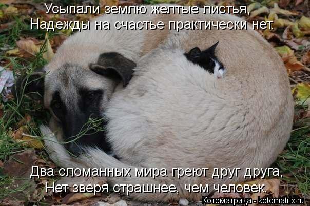 Котоматрица: Усыпали землю желтые листья, Надежды на счастье практически нет. Нет зверя страшнее, чем человек. Два сломанных мира греют друг друга,
