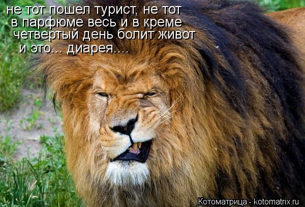 Котоматрица: не тот пошел турист, не тот  в парфюме весь и в креме   четвертый день болит живот  и это... диарея....