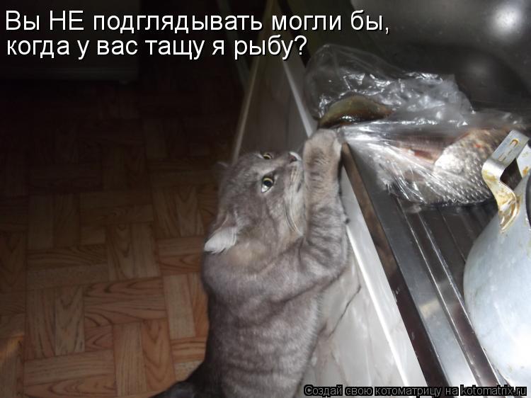 Котоматрица: когда у вас тащу я рыбу? Вы НЕ подглядывать могли бы,