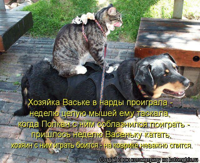 Котоматрица: Хозяйка Ваське в нарды проиграла -  неделю целую мышей ему таскала, когда Полкан с ним соблазнился поиграть -  пришлось неделю Васеньку ката