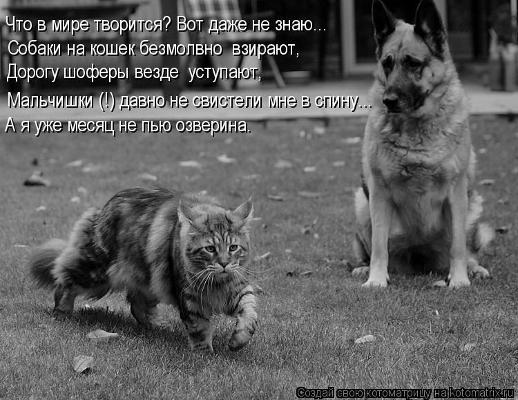 Котоматрица: Что в мире творится? Вот даже не знаю... Собаки на кошек безмолвно  взирают, Дорогу шоферы везде  уступают, А я уже месяц не пью озверина. Мальч