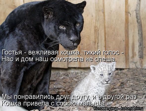 Котоматрица: Гостья - вежливая кошка, тихий голос - Нас и дом наш осмотрела не спеша. Мы понравились друг другу, и в другой раз Кошка привела с собою малыша