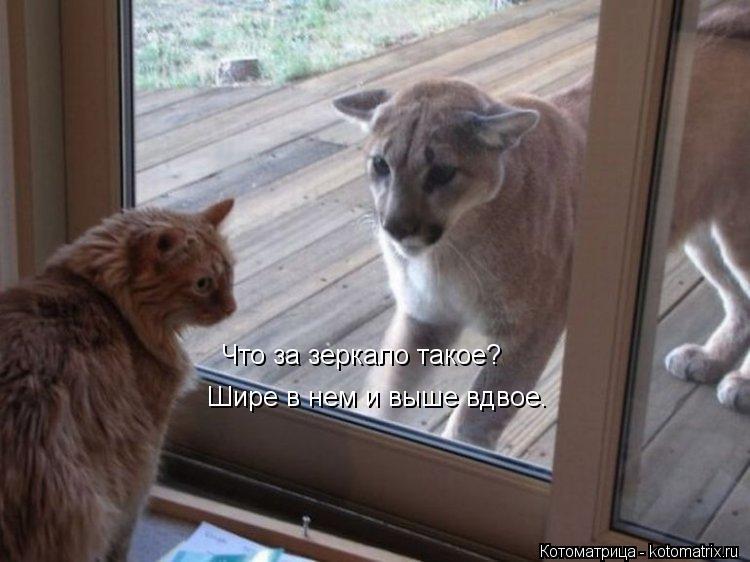 Котоматрица: Что за зеркало такое? Шире в нем и выше вдвое.