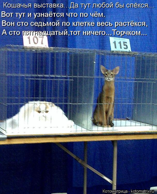 Котоматрица: Кошачья выставка...Да тут любой бы спёкся... Вон сто седьмой по клетке весь растёкся, Вот тут и узнаётся что по чём. А сто пятнадцатый,тот ниче