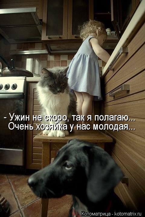 Котоматрица: - Ужин не скоро, так я полагаю... Очень хозяйка у нас молодая...
