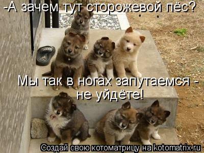 Котоматрица: -А зачем тут сторожевой пёс? Мы так в ногах запутаемся -  не уйдёте!
