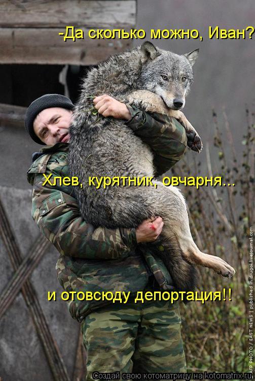 Котоматрица: -Да сколько можно, Иван? Хлев, курятник, овчарня... и отовсюду депортация!!