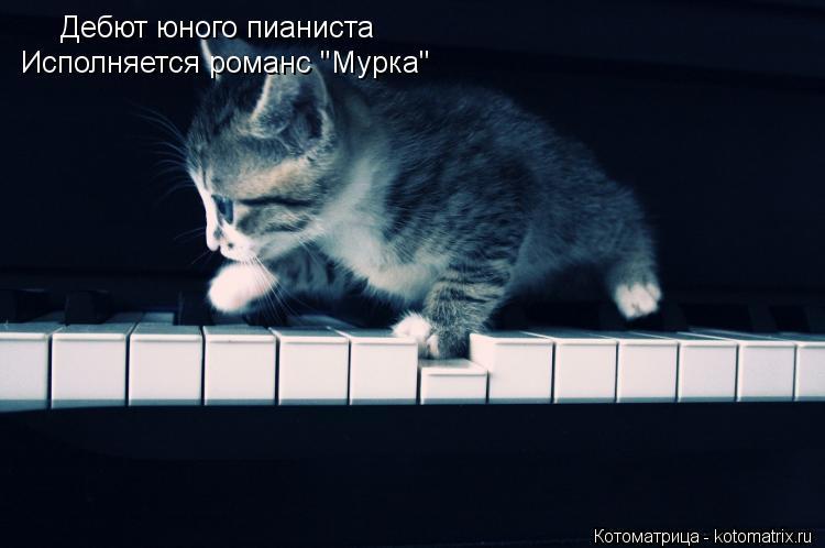 "Котоматрица: Дебют юного пианиста Исполняется романс ""Мурка"""