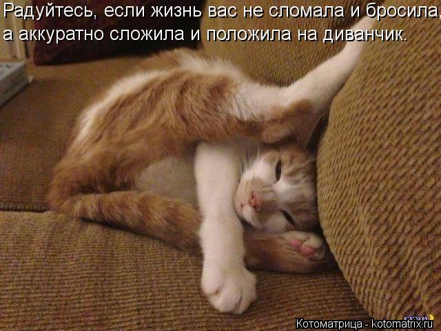 Котоматрица: Радуйтесь, если жизнь вас не сломала и бросила, а аккуратно сложила и положила на диванчик.