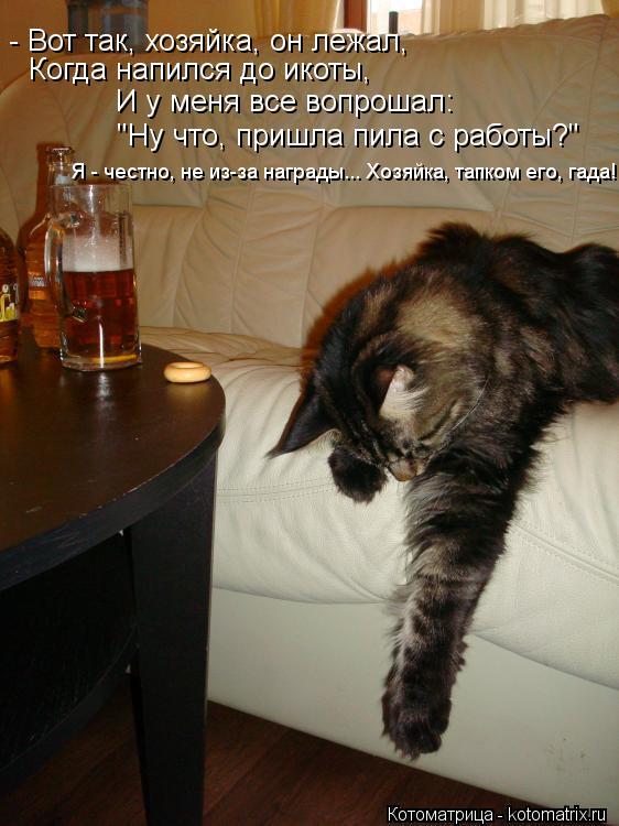 """Котоматрица: - Вот так, хозяйка, он лежал, Когда напился до икоты, И у меня все вопрошал: """"Ну что, пришла пила с работы?"""" Я - честно, не из-за награды... Хозяйка,"""