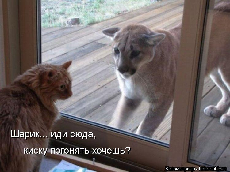 Котоматрица: Шарик... иди сюда,  киску погонять хочешь?