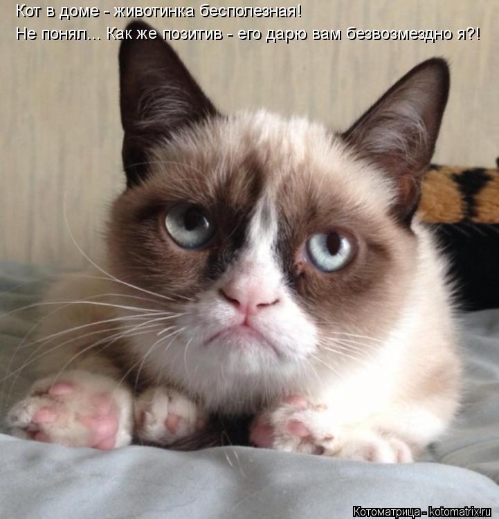 Котоматрица: Кот в доме - животинка бесполезная! Не понял... Как же позитив - его дарю вам безвозмездно я?!