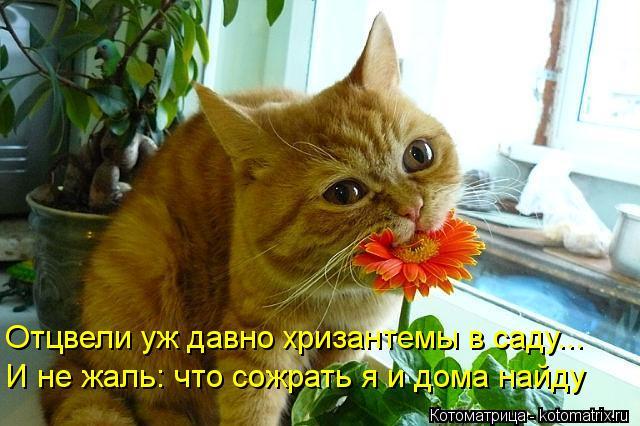 Котоматрица: Отцвели уж давно хризантемы в саду... И не жаль: что сожрать я и дома найду