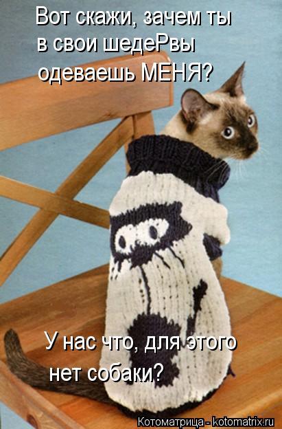 Котоматрица: Вот скажи, зачем ты  в свои шедеРвы одеваешь МЕНЯ? У нас что, для этого нет собаки?