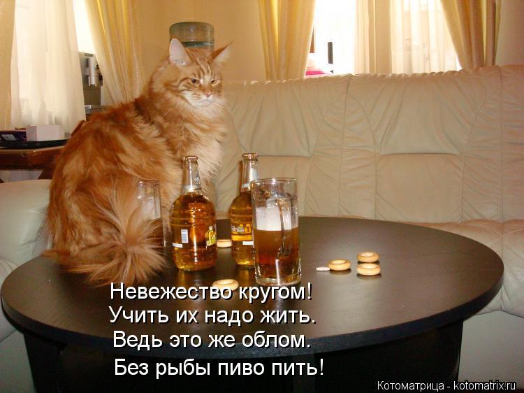 Котоматрица: Учить их надо жить. Невежество кругом! Ведь это же облом. Без рыбы пиво пить!