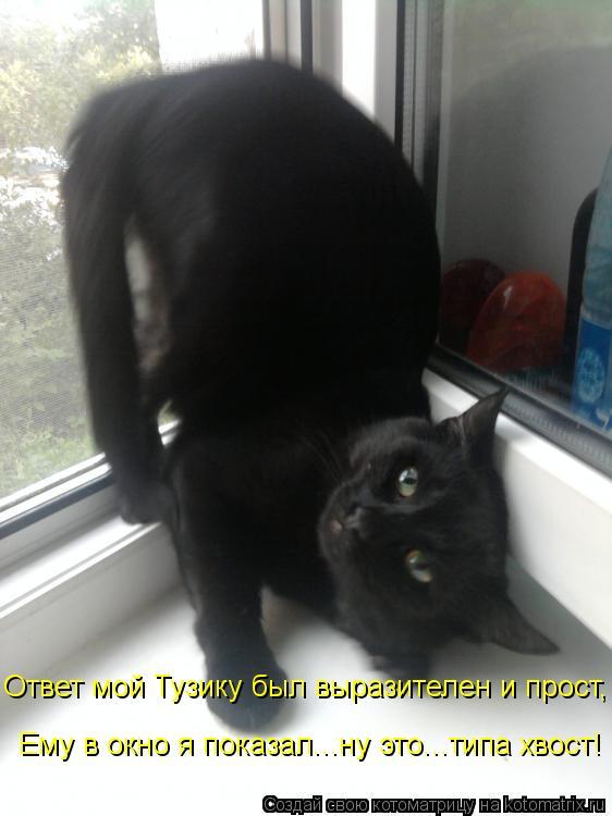 Котоматрица: Ответ мой Тузику был выразителен и прост, Ему в окно я показал...ну это...типа хвост!
