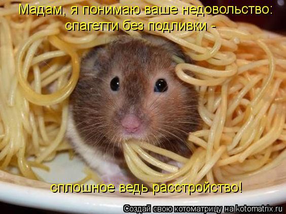 Котоматрица: Мадам, я понимаю ваше недовольство: спагетти без подливки - сплошное ведь расстройство!
