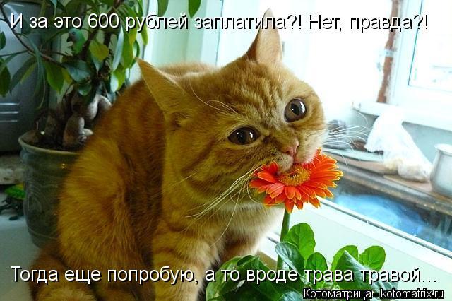 Котоматрица: И за это 600 рублей заплатила?! Нет, правда?! Тогда еще попробую, а то вроде трава травой...