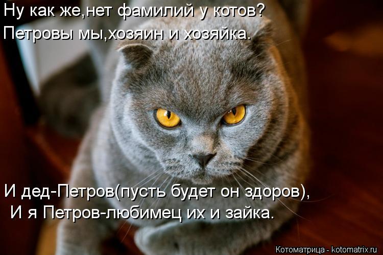 Котоматрица: Ну как же,нет фамилий у котов? Петровы мы,хозяин и хозяйка. И дед-Петров(пусть будет он здоров),  И я Петров-любимец их и зайка.
