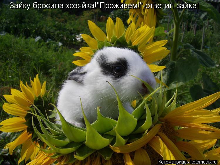 """Котоматрица: Зайку бросила хозяйка!""""Проживем!""""-ответил зайка!"""