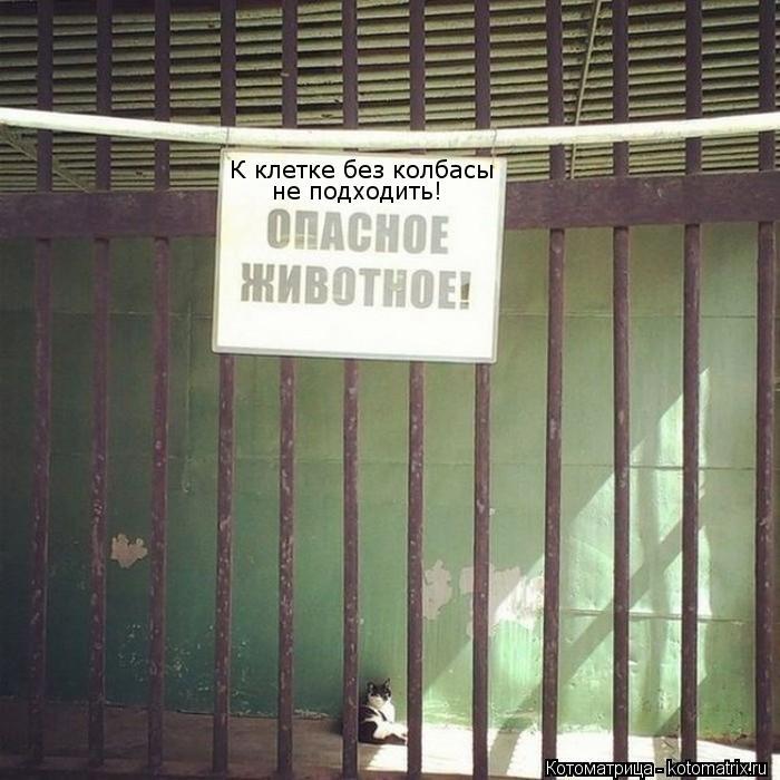 Котоматрица: К клетке без колбасы не подходить!