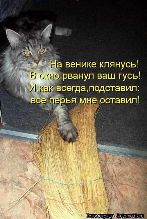 Котоматрица: На венике клянусь! В окно рванул ваш гусь! И,как всегда,подставил: все перья мне оставил!