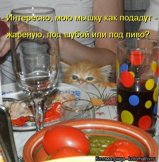 Котоматрица: - Интересно, мою мышку как подадут -  жареную, под шубой или под пиво?