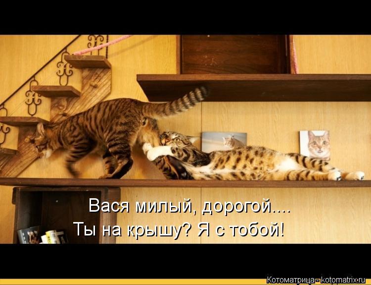 Котоматрица: Вася милый, дорогой.... Ты на крышу? Я с тобой!