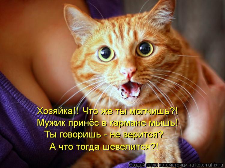 Котоматрица: Хозяйка!! Что же ты молчишь?! Мужик принёс в кармане мышь! Ты говоришь - не верится? А что тогда шевелится?!