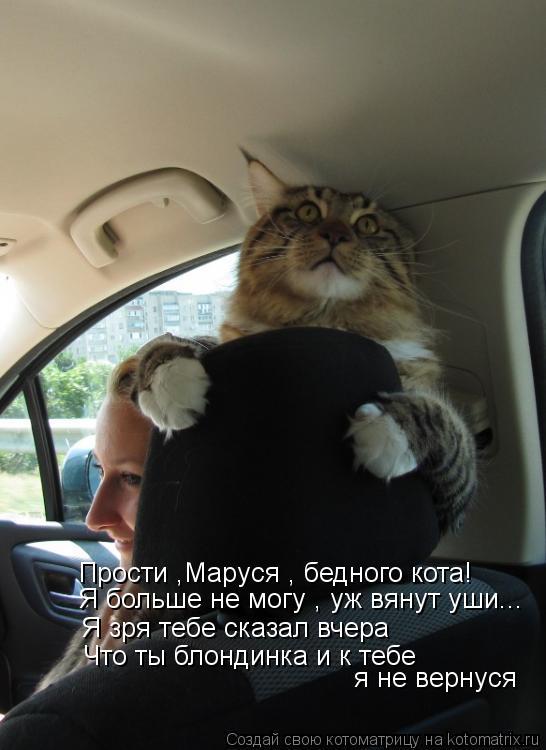 Котоматрица: Прости ,Маруся , бедного кота! Я больше не могу , уж вянут уши... Я зря тебе сказал вчера  Что ты блондинка и к тебе я не вернуся