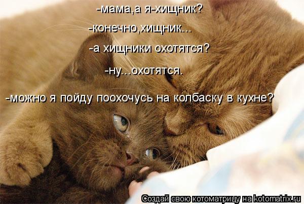 Котоматрица: -мама,а я-хищник? -конечно,хищник... -а хищники охотятся? -ну...охотятся. -можно я пойду поохочусь на колбаску в кухне?