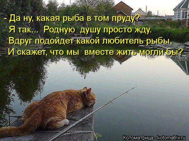 Котоматрица: - Да ну, какая рыба в том пруду?  Я так...  Родную  душу просто жду.  Вдруг подойдет какой любитель рыбы,  И скажет, что мы  вместе жить могли бы?