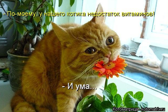 Котоматрица: - По-моему, у нашего котика недостаток витаминов! - И ума...