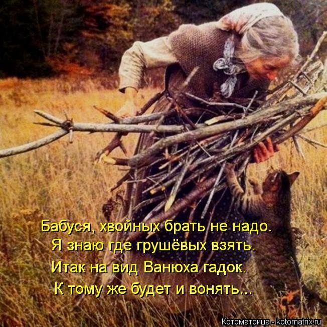 Котоматрица: Бабуся, хвойных брать не надо. Я знаю где грушёвых взять. Итак на вид Ванюха гадок. К тому же будет и вонять...