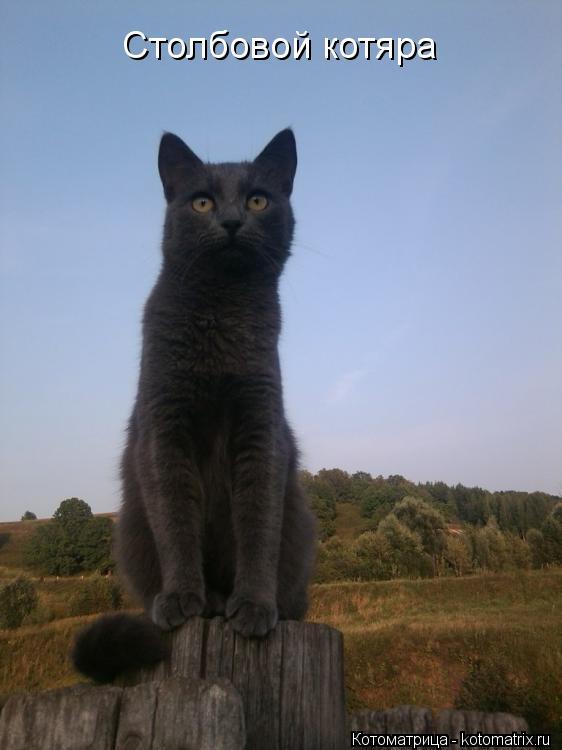 Котоматрица: Столбовой котяра