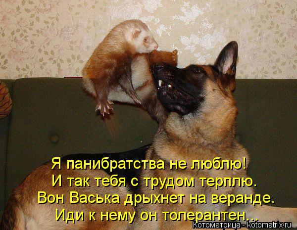 Котоматрица: Я панибратства не люблю! И так тебя с трудом терплю. Вон Васька дрыхнет на веранде. Иди к нему он толерантен...