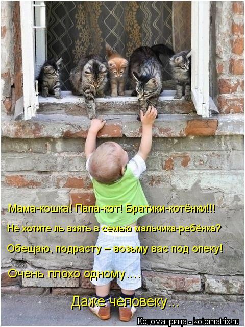 Котоматрица: Мама-кошка! Папа-кот! Братики-котёнки!!!  Не хотите ль взять в семью мальчика-ребёнка? Обещаю, подрасту – возьму вас под опеку! Очень плохо одн