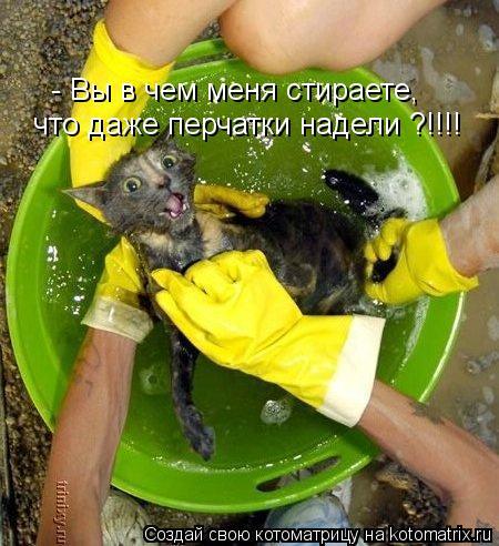 Котоматрица: - Вы в чем меня стираете, что даже перчатки надели ?!!!!