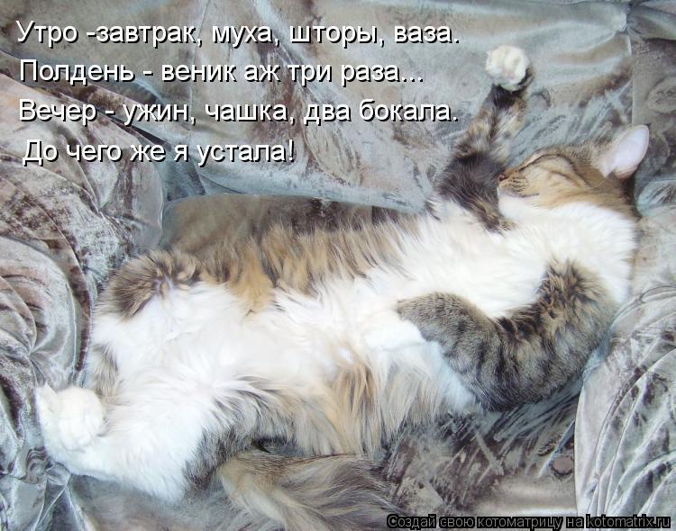 Котоматрица: Полдень - веник аж три раза... До чего же я устала! Вечер - ужин, чашка, два бокала. Утро -завтрак, муха, шторы, ваза.