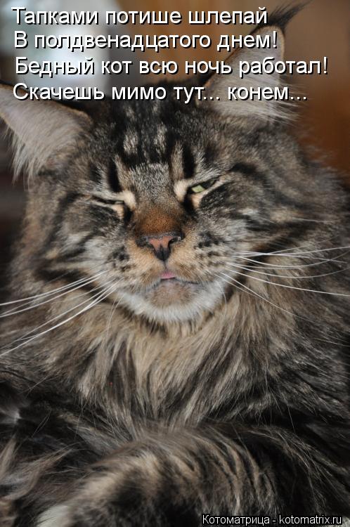 Котоматрица: Тапками потише шлепай В полдвенадцатого днем! Бедный кот всю ночь работал! Скачешь мимо тут... конем...