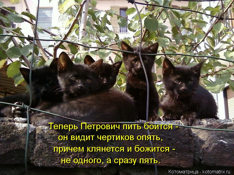 Котоматрица: Теперь Петрович пить боится -  он видит чертиков опять, причем клянется и божится -  не одного, а сразу пять.