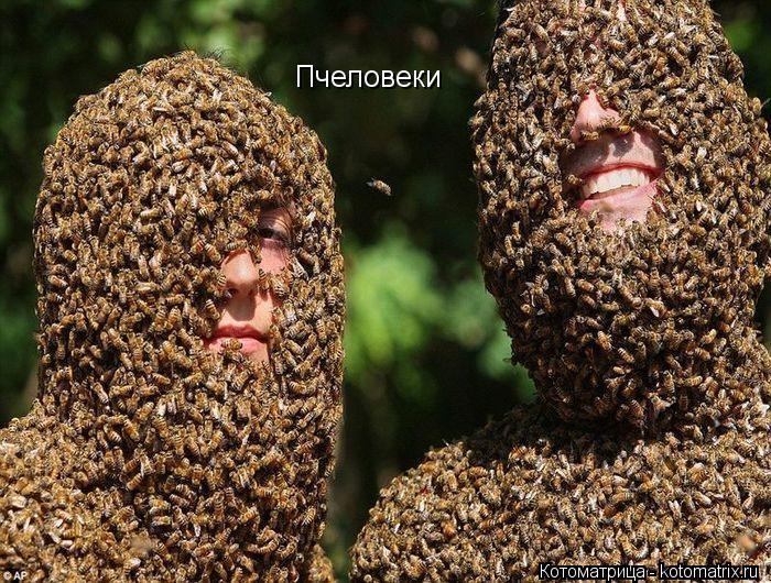 Котоматрица: Пчеловеки