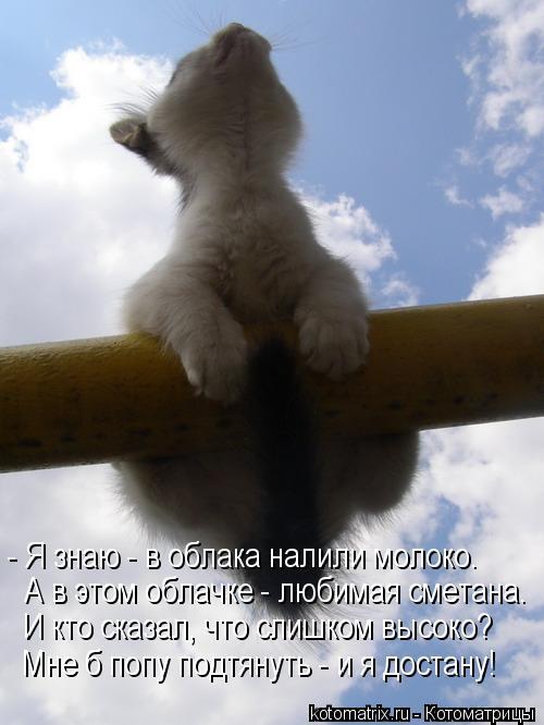 Котоматрица: - Я знаю - в облака налили молоко. А в этом облачке - любимая сметана. И кто сказал, что слишком высоко? Мне б попу подтянуть - и я достану!