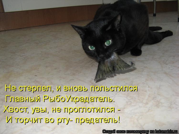 Котоматрица: Хвост, увы, не проглотился - Главный РыбоУкрадатель. Не стерпел, и вновь польстился И торчит во рту- предатель!