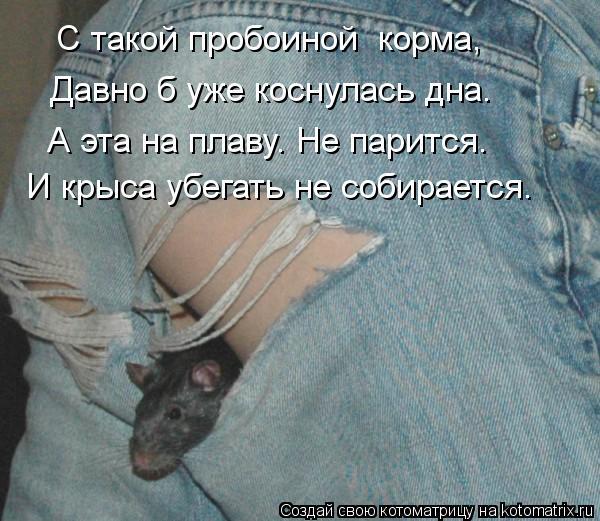 Котоматрица: С такой пробоиной  корма, И крыса убегать не собирается. Давно б уже коснулась дна. А эта на плаву. Не парится.